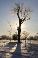 Winter Sun Behind Old Tree Fine Art Print
