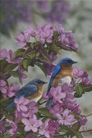 Bluebirds & Spring Blossoms Fine Art Print