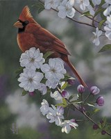 Cardinal Spring Blossoms Fine Art Print