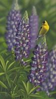 Goldfinch Lupine Fine Art Print