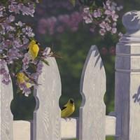 Goldfinch Trio Fine Art Print