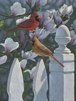 Cardinals Magnolias Fine Art Print