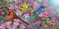 Songbird Colors Fine Art Print