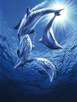 Dolphin Swing Fine Art Print