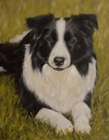 Collie Resting 2 Fine Art Print