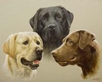 Trio Fine Art Print