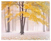 Early Autumn Snow Fine Art Print