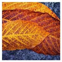 Three Leaves Fine Art Print