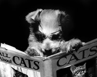 "All About Cats by Bettmann-Corbis - 20"" x 16"""