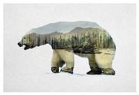 Arctic Polar Bear Fine Art Print
