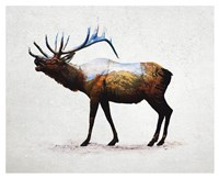 Rocky Mountain Elk Fine Art Print