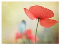 Poppy Fine Art Print