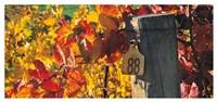 Row 88 Fine Art Print