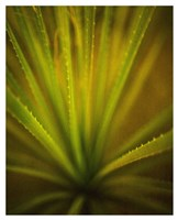 California Monocot Fine Art Print