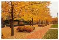 Fall Walkway Fine Art Print