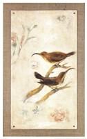 Long-Billed Sunbird Fine Art Print