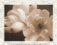 Winter Magnolia I Fine Art Print