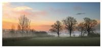 The Mist Fine Art Print