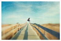 Fly Fine Art Print