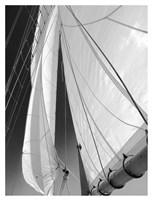 Sailboat Sails Florida Fine Art Print