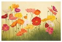 Sunlit Poppies Fine Art Print