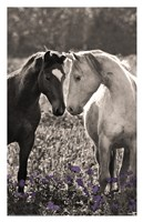 Face to Face Fine Art Print
