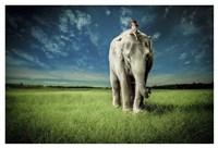 Elephant Carry Me Fine Art Print