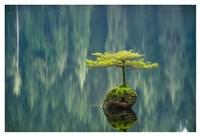 Fairy Lake Bonsai Fine Art Print
