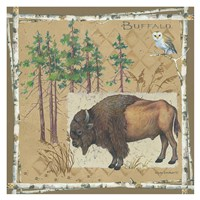 Bison / Buffalo Fine Art Print