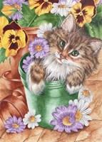 Pansy Pots Fine Art Print
