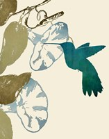 Hummingbird and Morning Glories Fine Art Print