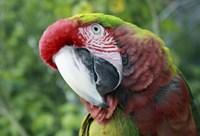 Quizacle Parrot Fine Art Print