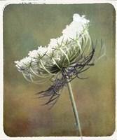 Wild Bloom Fine Art Print