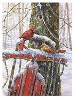Red Sled With Cardinals Fine Art Print