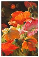 Springtime Blossoms Fine Art Print