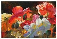 Summer Radiance Fine Art Print