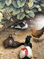 Old Barnyard Chickens Fine Art Print