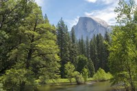 Half Dome from Sentinel Bridge Fine Art Print