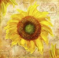 Tuscan Flower 7 Fine Art Print