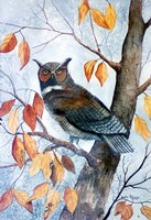 Owl and Autumn Leaves Fine Art Print