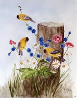 American Goldfinch 3 Fine Art Print