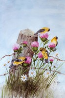 American Goldfinch Fine Art Print