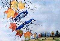 Blue Jays Fine Art Print