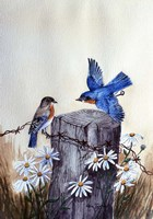 Bluebirds With Daisies 3 Fine Art Print