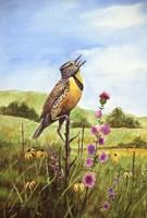 Meadowlark 4 Fine Art Print