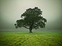 Misty Tree Fine Art Print