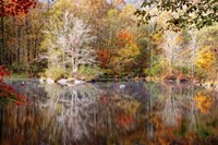 Autumn's Peak Fine Art Print