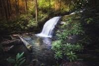 Morning Glow At The Waterfall Fine Art Print