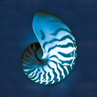 Cyanotype Sea I Fine Art Print