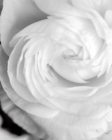 Black and White Petals I Fine Art Print